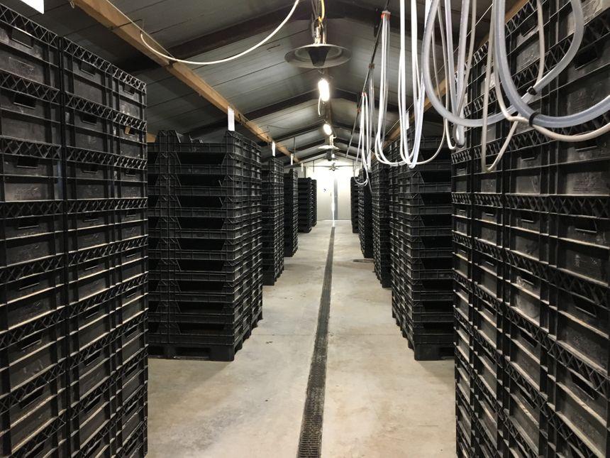 Un élevage de larves de vers de farine pour l'alimentation animale expérimenté à Saint-Ignat