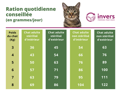 Ration croquettes chats